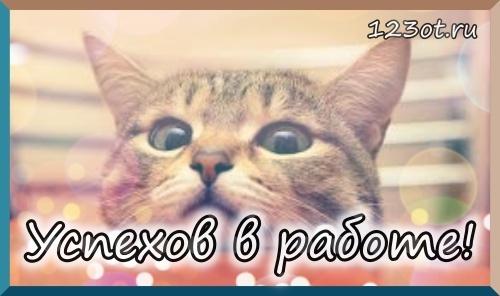 Кот! Пожелание успехов в работе с котом! Картинки, открытки! Успешного рабочего дня! Красивое пожелание! (Сообщение на вацап, вайбер, телеграм! Поделиться открыткой в вконтакте, одноклассниках, фейсбуке онлайн!) скачать открытку бесплатно | 123ot