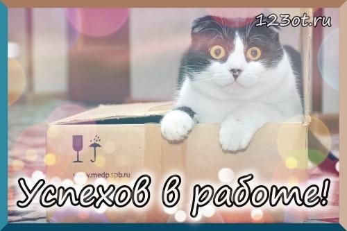 Прикольный кот! Кот в коробке! Удачи в работе! Картинки и открытки! Успешного рабочего дня! Красивое пожелание! (Сообщение на вацап, вайбер, телеграм! Скачать открытку онлайн бесплатно для vk, ok, facebook!) скачать открытку бесплатно | 123ot