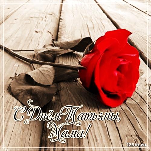 Картинка на день Татьяны! Красная роза для Тани! скачать открытку бесплатно | 123ot