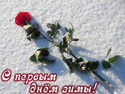 Открытка с первым днем зимы 1 декабря роза. Открытки  Открытка с первым днем зимы 1 декабря Красная роза на снегу скачать бесплатно онлайн скачать открытку бесплатно | 123ot