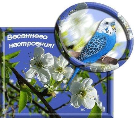 Открытка, картинка, первый день весны, желаю весеннего настроения. Открытки  Открытка, картинка, первый день весны, открытка с первым днем весны, поздравление с первым днём весны скачать бесплатно онлайн скачать открытку бесплатно | 123ot
