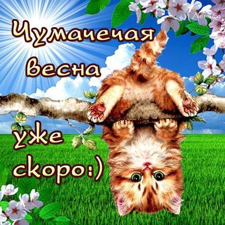 Открытка, картинка, первый день весны, первое марта, котенок. Открытки  Открытка, картинка, первый день весны, открытка с первым днем весны, поздравление с первым днем весны, начало весны скачать бесплатно онлайн скачать открытку бесплатно | 123ot