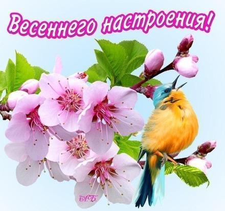 Открытка, картинка, первый день весны, первое марта, весеннего настроения. Открытки  Открытка, картинка, первый день весны, открытка с первым днем весны, поздравление с первым днем весны, начало весны скачать бесплатно онлайн скачать открытку бесплатно | 123ot