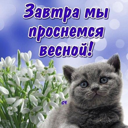 Открытка, картинка, первый день весны, первое марта, котик. Открытки  Открытка, картинка, первый день весны, открытка с первым днем весны, поздравление с первым днем весны, начало весны скачать бесплатно онлайн скачать открытку бесплатно | 123ot