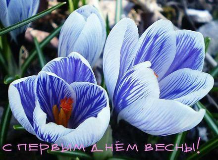 Открытка, картинка, первый день весны, первое марта, цветы. Открытки  Открытка, картинка, первый день весны, открытка с первым днем весны, поздравление с первым днем весны, начало весны скачать бесплатно онлайн скачать открытку бесплатно | 123ot