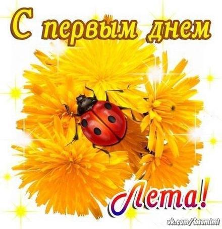 Открытка, картинка, 1 июня, первый день лета, первый летний день, поздравление, лето, здравствуй, лето, летний привет, одуванчики, цветы. Открытки  Открытка, картинка, 1 июня, первый день лета, первый летний день, поздравление, лето, здравствуй, лето, летний привет, одуванчики, цветы, божья коровка скачать бесплатно онлайн скачать открытку бесплатно | 123ot