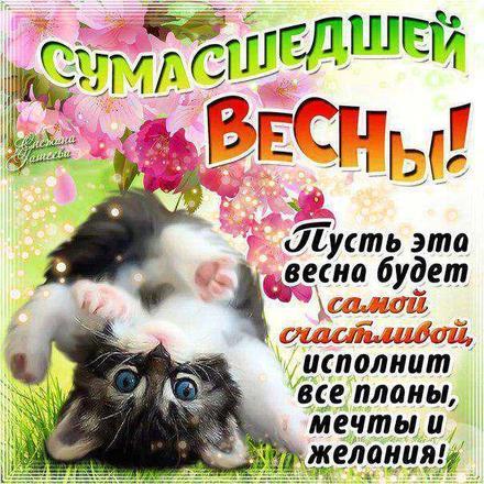 Открытка, картинка, первый день весны, прикол, котенок. Открытки  Открытка, картинка, первый день весны, открытка с первым днем весны, поздравление с первым днем весны, начало весны скачать бесплатно онлайн скачать открытку бесплатно | 123ot