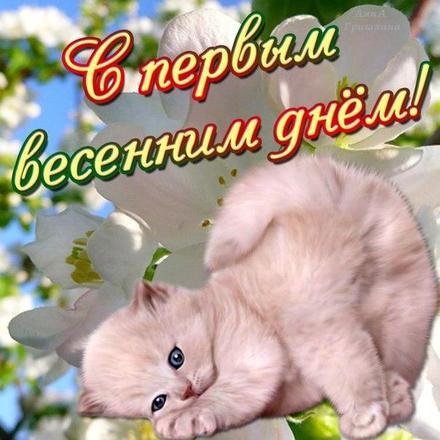 Открытка, картинка, Первый день весны, весна, поздравление, весна пришла, праздник весны, 1 марта, котенок. Открытки  Открытка, картинка, Первый день весны, весна, поздравление, весна пришла, праздник весны, 1 марта, котенок, первый весенний день скачать бесплатно онлайн скачать открытку бесплатно | 123ot