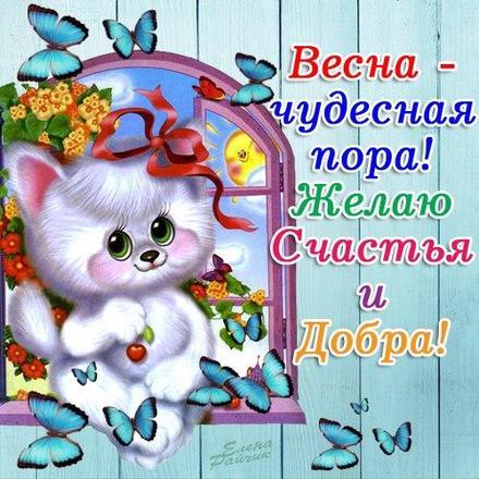 Открытка, картинка, Первый день весны, весна, поздравление, весна пришла, котенок. Открытки  Открытка, картинка, Первый день весны, весна, поздравление, весна пришла, котенок, цветы скачать бесплатно онлайн скачать открытку бесплатно | 123ot