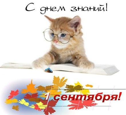 Открытка, картинка, 1 сентября, начало учебного года, день знаний, поздравление, кот. Открытки  Открытка, картинка, 1 сентября, начало учебного года, день знаний, поздравление, кот, очки скачать бесплатно онлайн скачать открытку бесплатно | 123ot