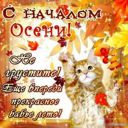 Открытка, картинка, Первый день осени, 1 сентября, начало осени, осень, фразы, пожелание, осень пришла, конец лета, чудесная пора, золотая осень, пожелание, котенок. Открытки  Открытка, картинка, Первый день осени, 1 сентября, начало осени, осень, фразы, пожелание, осень пришла, конец лета, чудесная пора, золотая осень, пожелание, котенок, бабье лето скачать бесплатно онлайн скачать открытку бесплатно   123ot