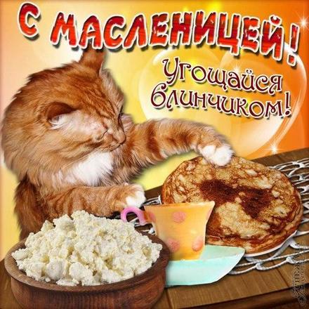 Открытка, картинка, Масленица, русская традиция, поздравление, русская традиция, блины, мед, творог. Открытки  Открытка, картинка, Масленица, русская традиция, поздравление, русская традиция, блины, мед, творог, угощение, котик скачать бесплатно онлайн скачать открытку бесплатно | 123ot