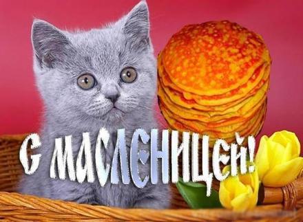Открытка, картинка, масленица, открытка на масленицу, блины, котенок. Открытки  Открытка, картинка, масленица, открытка на масленицу, открытка с масленицей, поздравление на масленицу, поздравление с масленицей, масленичная неделя скачать бесплатно онлайн скачать открытку бесплатно | 123ot
