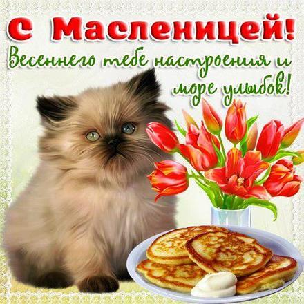 Открытка, картинка, Масленица, русская традиция, поздравление, русская традиция, блины, котенок. Открытки  Открытка, картинка, Масленица, русская традиция, поздравление, русская традиция, блины, котенок, цветы, тюльпаны, весна скачать бесплатно онлайн скачать открытку бесплатно | 123ot