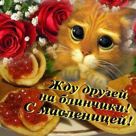 Открытка, картинка, Масленица, русская традиция, поздравление, блины, мед. Открытки  Открытка, картинка, Масленица, русская традиция, поздравление, блины, мед, приглашение, Кот из Шрэка скачать бесплатно онлайн скачать открытку бесплатно | 123ot