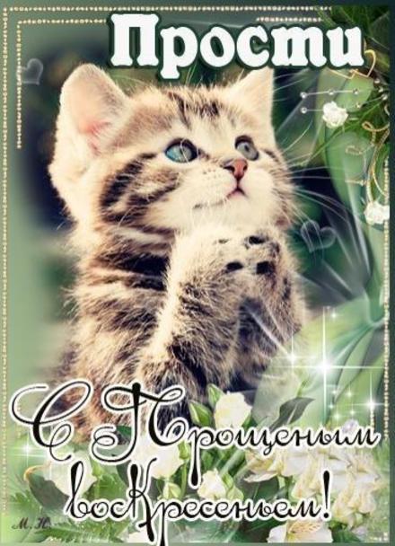 Открытка, картинка, Прощенное Воскресенье, русская традиция, котенок. Открытки  Открытка, картинка, Прощенное Воскресенье, русская традиция, котенок, прощение скачать бесплатно онлайн скачать открытку бесплатно | 123ot