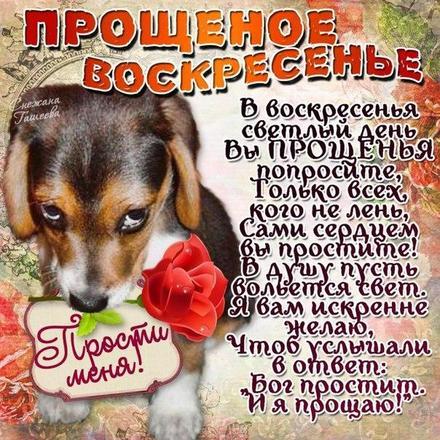 Открытка, картинка, Прощенное Воскресенье, русская традиция, православный праздник, прощение, щенок. Открытки  Открытка, картинка, Прощенное Воскресенье, русская традиция, православный праздник, прощение, щенок, роза, стихи скачать бесплатно онлайн скачать открытку бесплатно | 123ot