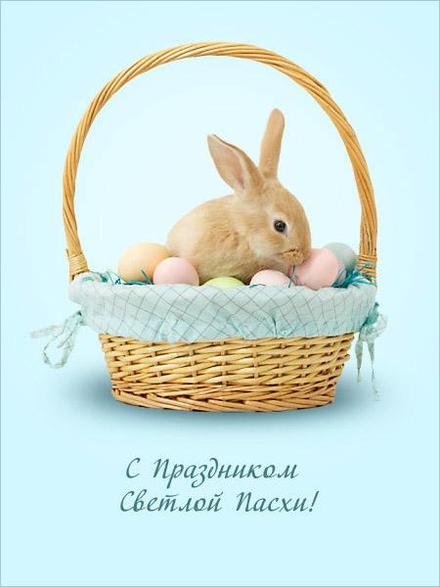 Открытка, картинка, Пасха, поздравление, Христос Воскрес, православный праздник, русская традиция, кролик. Открытки  Открытка, картинка, Пасха, поздравление, Христос Воскрес, православный праздник, русская традиция, кролик, корзинка скачать бесплатно онлайн скачать открытку бесплатно | 123ot