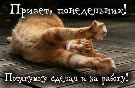 Открытка, картинка ох, уж этот понедельник! Котик! Потягуши с утра! Открытка про понедельник! Хорошего понедельника! скачать открытку бесплатно | 123ot