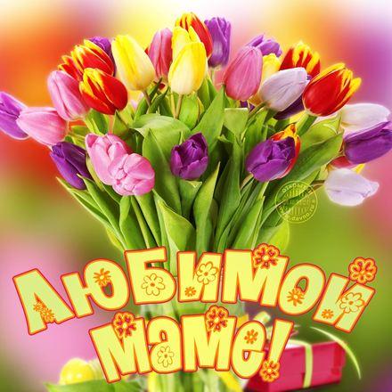 Букетов тюльпанов для мамы. С Добрым Утром! Открытка с тюльпанами, открытка с добрым утром любимой маме! Открытка для мамы! Доброе утро, мама! скачать открытку бесплатно | 123ot