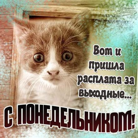 Открытка, картинка. Ох уж этот понедельник! Грустный котик. Открытка про понедельник! Хорошего понедельника! скачать открытку бесплатно | 123ot