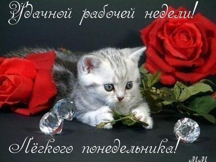 Открытка, картинка. Ох уж этот понедельник! Милый котик, розочки, алмазы. Открытка про понедельник! Хорошего понедельника! скачать открытку бесплатно   123ot