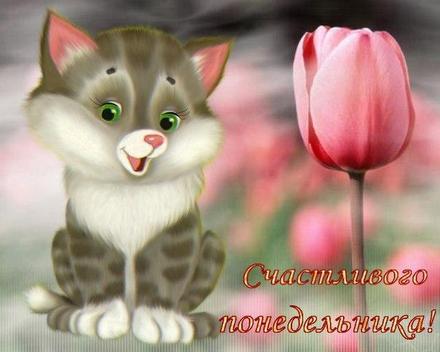 Открытка, картинка. Ох уж этот понедельник! Милый котик, тюльпанчик. Открытка про понедельник! Хорошего понедельника! скачать открытку бесплатно | 123ot