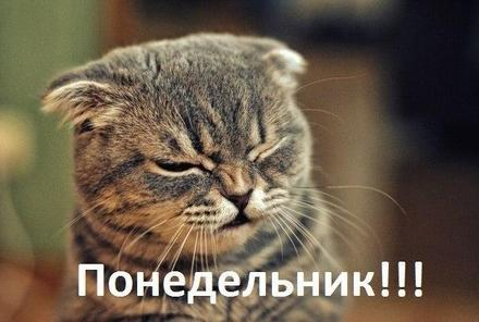 Открытка, картинка. Ох уж этот понедельник! Недовольный кот. Открытка про понедельник! Хорошего понедельника! скачать открытку бесплатно   123ot
