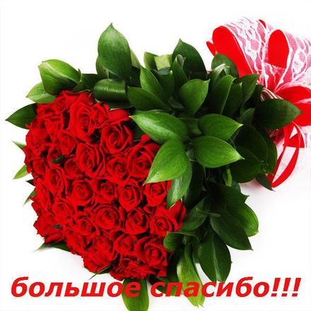 Открытка спасибо! Открытка, картинка. Открытки с цветами. Букет огромных роз. Красные розы. Очень красиво. скачать открытку бесплатно   123ot