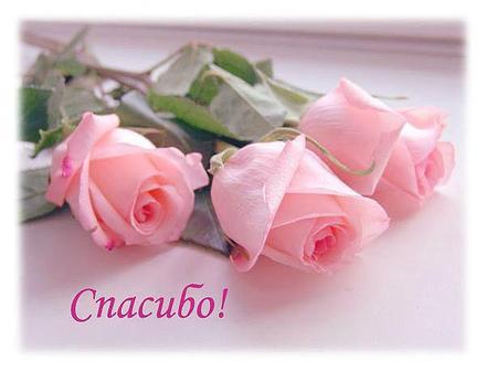 ???? Открытка, картинка. Открытки с цветами. Красивые и нежные розы. Открытка  спасибо! | открытки с цветами | открытка, картинка 123ot