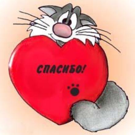 Открытка, Картинка. Открытки с милыми животными. Котик и красивое сердечко. Открытка спасибо! скачать открытку бесплатно   123ot