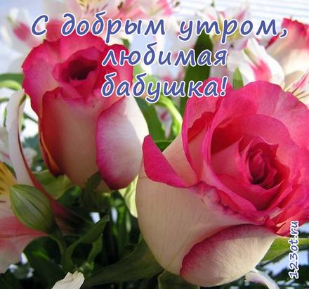 Открытка с добрым утром, бабушка! Открытка для бабушки! Живые розы. Красивые розы. Красивые бутоны роз. Доброе утро! скачать открытку бесплатно | 123ot