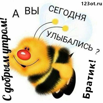 Открытка с добрым утром братику! Доброе утро для братишки! Прикольная пчела. Пчёлка. Открытка братишке от брата или сестры с пожеланием доброго утра! скачать открытку бесплатно   123ot