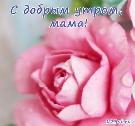 Открытка с добрым утром, мама! Бутон розовой розы. Большой бутон. Открытка для мамы! Доброе утро! скачать открытку бесплатно | 123ot