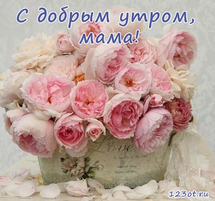 Открытка с добрым утром, мама! Много роз. Розы. Открытка для мамы! Доброе утро! скачать открытку бесплатно | 123ot