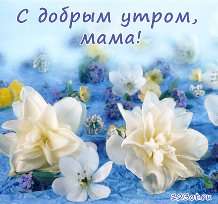 Открытка с добрым утром, мама! Нежные белые цветы. Нежность. Цветы. Открытка для мамы! Доброе утро! скачать открытку бесплатно   123ot