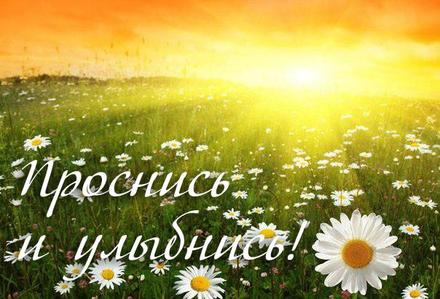 Яркая открытка с ромашками для мамы! Открытка маме с добрым утром! Доброе утро, мама! Ромашки для мамы! Ромашковое поле. скачать открытку бесплатно | 123ot