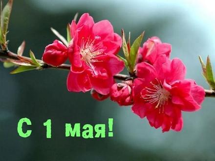 Открытка с 1 мая и красными цветами, картинка 1 мая, красивые цветы, ветка с цветами, Первомай, праздник, День весны и труда, поздравление! скачать открытку бесплатно | 123ot