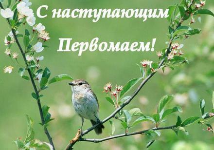 Открытка с наступающим 1 мая, наступающий первомай, майские праздники, пптичка. Скачать бесплатно! скачать открытку бесплатно | 123ot
