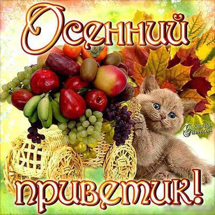 Открытка, картинка, привет, осенний привет, приветик, осень, теплый привет, котенок, фрукты. Открытки  Открытка, картинка, привет, осенний привет, приветик, осень, теплый привет, котенок, фрукты, урожай скачать бесплатно онлайн скачать открытку бесплатно | 123ot