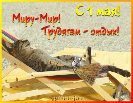 Открытка 1 мая, первомай, майские праздники с котом, цветы, весна, праздник весны и труда, майские праздники, прикол с котом. скачать открытку бесплатно | 123ot