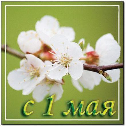 Открытка 1 мая, Первомай, праздник 1 мая, День весны и труда, поздравление на 1 мая, мир, труд, май, майские праздники, небо, веточка с цветами. скачать открытку бесплатно | 123ot