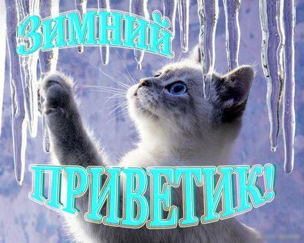 Открытка, картинка, привет, зимний привет, приветик, зима, котенок. Открытки  Открытка, картинка, привет, зимний привет, приветик, зима, котенок, сосулька скачать бесплатно онлайн скачать открытку бесплатно   123ot