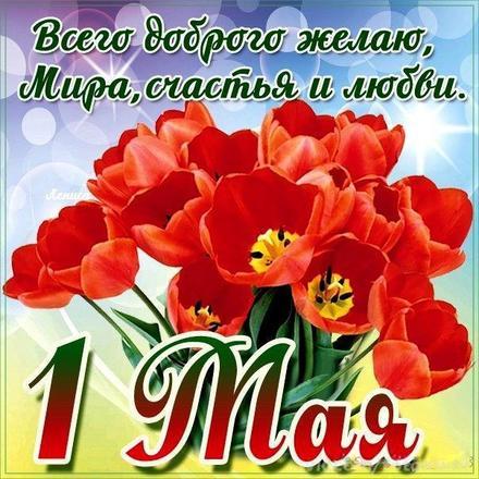 Открытка на 1 мая, картинка с 1 мая, первомай, майские праздники, красные весенние цветы, весна, красные тюльпаны. скачать открытку бесплатно   123ot