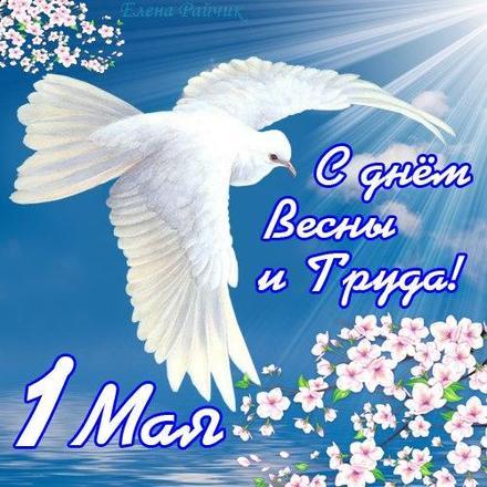 Открытка 1 мая, Первомай, праздник 1 мая, День весны и труда, поздравление, небо и голубь. скачать открытку бесплатно | 123ot