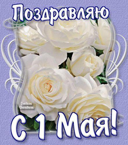 Открытка 1 мая, картинка на 1 мая, первомай, майские праздники, белые розы, цветы. скачать открытку бесплатно | 123ot