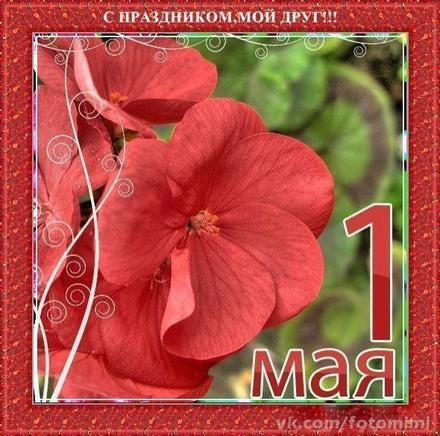 Открытка 1 мая, картинка 1 мая, первомай, майские праздники, цветы, весна, праздник весны и труда, майские праздники. скачать открытку бесплатно   123ot