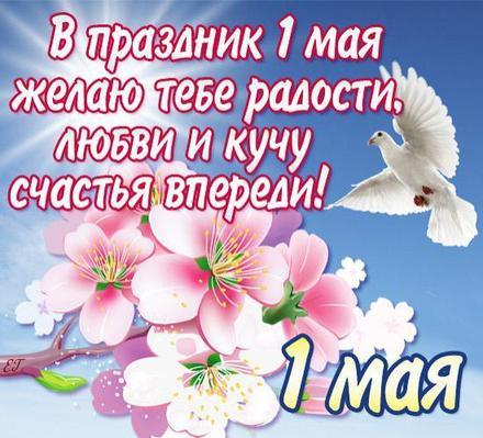 Открытка 1 мая, первомай, майские праздники, цветы, весна, праздник весны и труда, майские праздники, голубь. скачать открытку бесплатно | 123ot