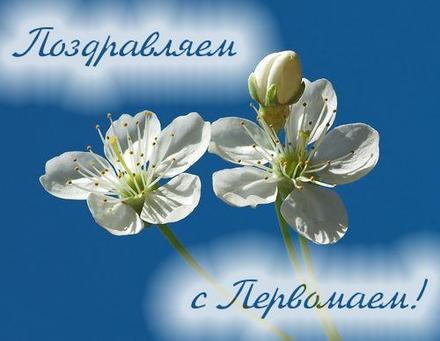 Открытка поздравляем с 1 мая, картинка 1 мая с цветами яблони на фоне неба, Первомай, праздник, День весны и труда, поздравление! скачать открытку бесплатно | 123ot