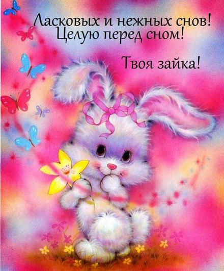 Нежная открытка, спокойной ночи. Открытка с зайцем и цветами на розовом фоне ласковых и нежных снов. скачать открытку бесплатно | 123ot